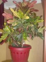Продам Декоративные растения