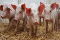 Продаю Сельхоз животные