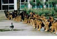 Предлагаю Услуги для животных