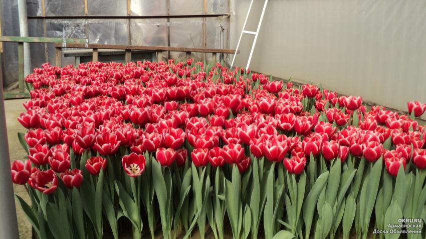 Купить цветы оптом недорого в Москве  Срезанные цветы