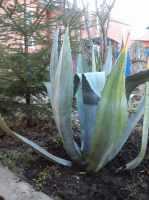 Продаю Декоративные растения