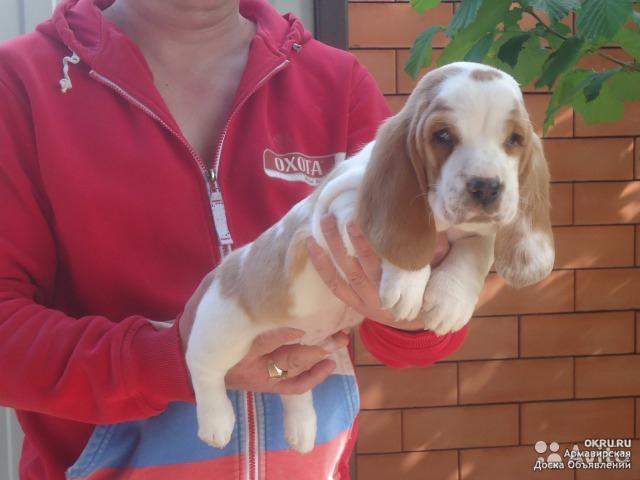 собаки в ставропольском крае продажа фото