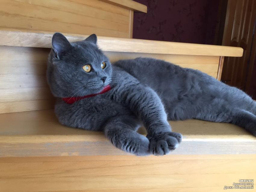 Толстый черный кот